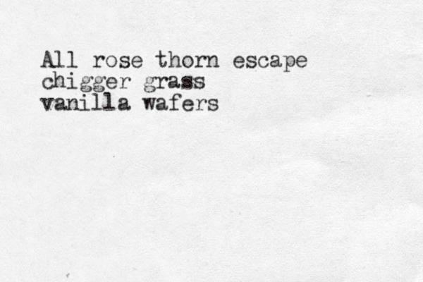 All rose thorn escape chigger grass vanilla wafers