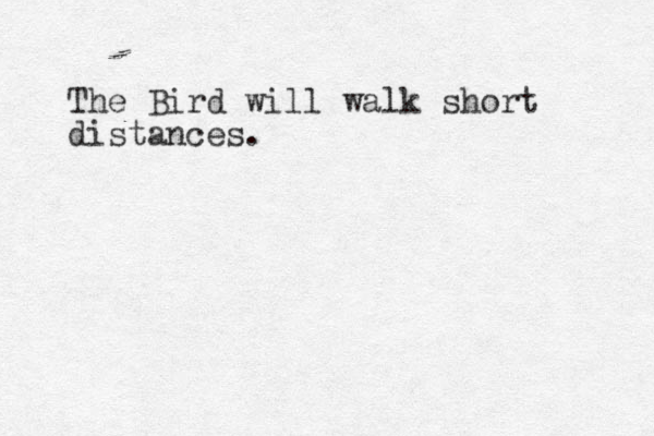 The Bird will walk short distances.
