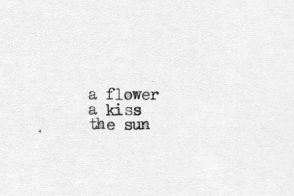 a flower a kiss the sun